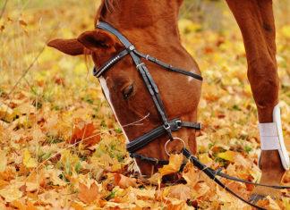 Jak działają odżywki dla koni?
